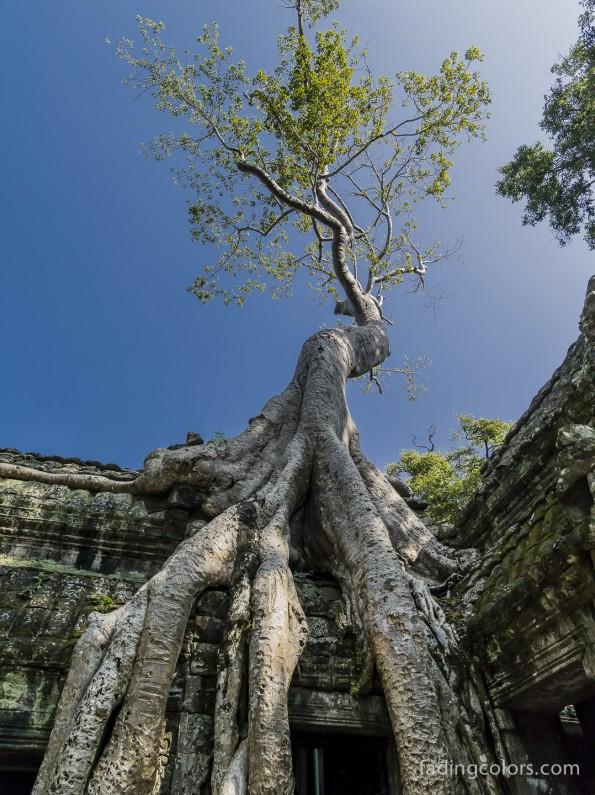 AngkorHawi-9991